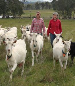 yes.Holy Goat Farm_160914_0055